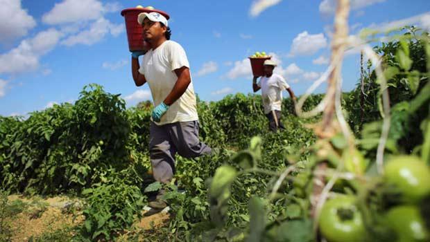 Los mexicanos en Estados Unidos son ocho veces más productivos en agricultura que los mexicanos en su país: Lelo de Larrea.