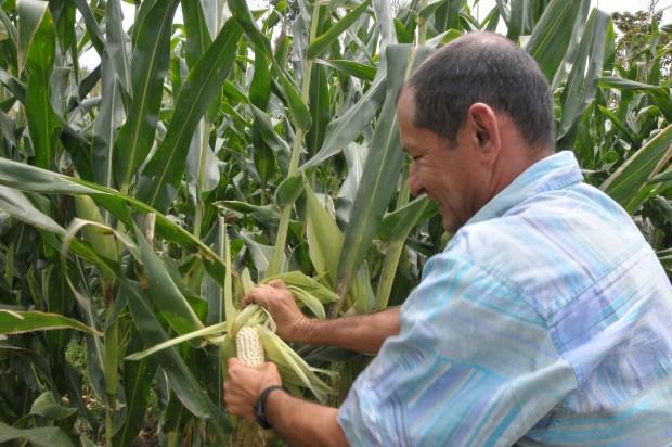 La producción de maíz impulsó al alza el crecimiento de la actividad primaria en agosto.