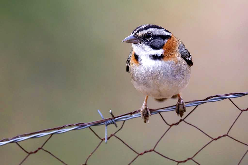 El ruido ambiental, las luces, la contaminación y la proximidad con los humanos, han afectado la forma de vida de las aves.