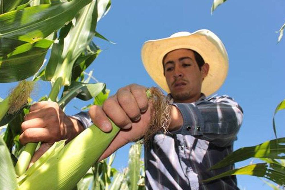 El recorte redujo el presupuesto a 10,309.5 millones de pesos, que alcanza para 1,516,645 productores.