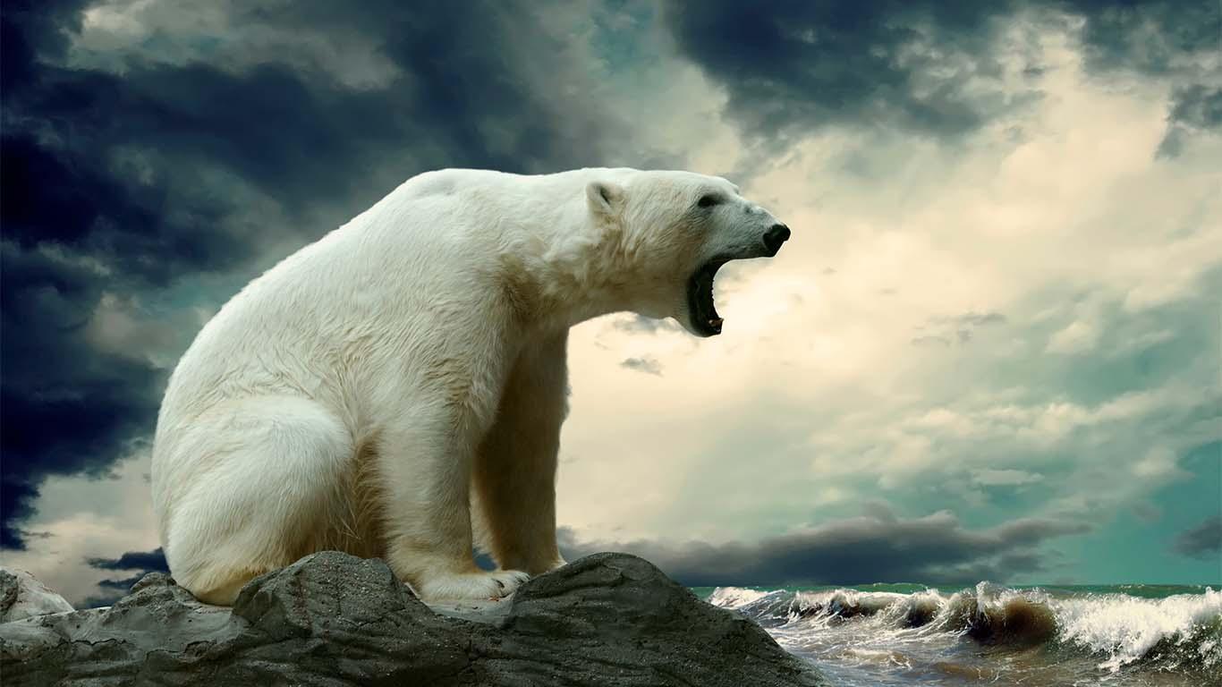 En tan solo 42 años más de la mitad de la población de vida silvestre ha desaparecido, reveló el más reciente Índice de Vida en el Planeta de WWF.