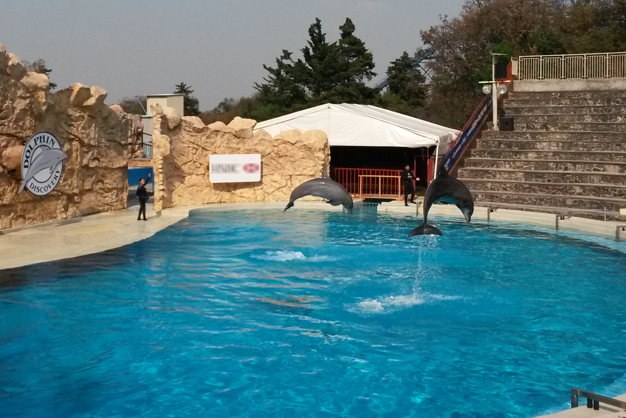 Se impondrán multas de hasta 300 mil pesos a quienes sigan utilizando delfines