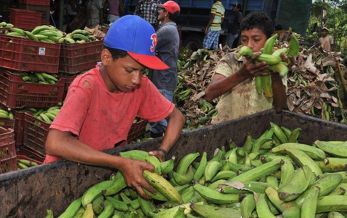 La ocupación infantil asciende al 8.6%