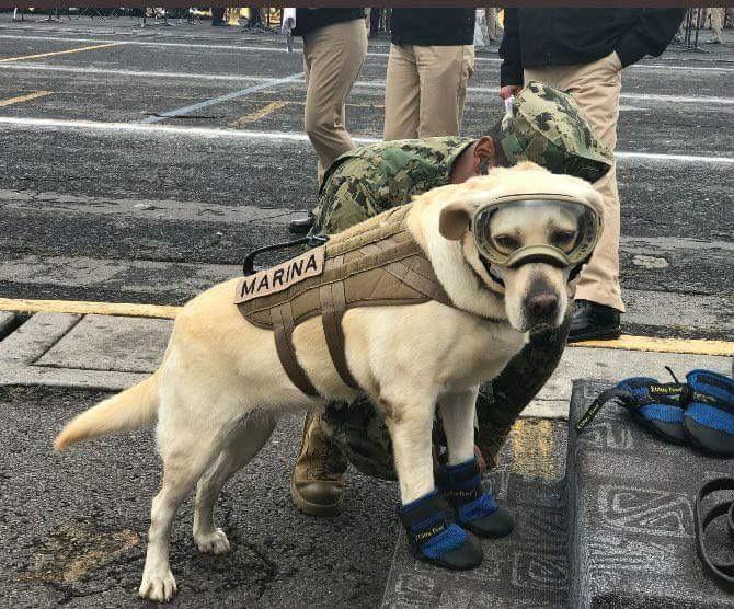 La perrita Frida donó sus botitas de rescatista al Museo del Calzado de la CDMX