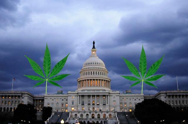 En Washington la marihuana no se vender, pero nada te detiene si la quieres regalar, por lo que tiendas y organizaciones obsequian un poco en cada compra.