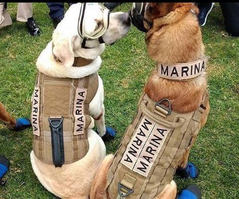Frida, la perrita rescatista se jubilará en el 2010, para entrenar a otros perros. Foto: Instagram