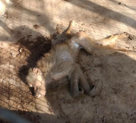 Animales de todo tipo estaban en deplorables condiciones en un zoológico abandonado de Tamualipas