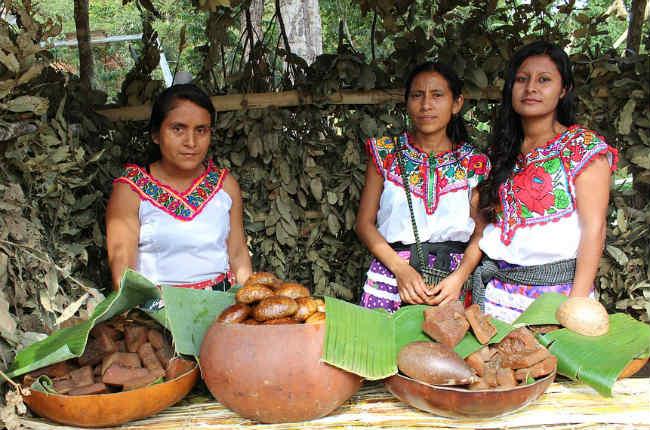 Más del 60% de los idiomas indígenas en México no son aprendidos por los niños de sus comunidades hablantes