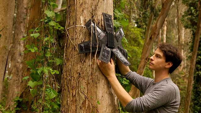Esta organización utiliza smartphones como parte de las soluciones de la deforestación.