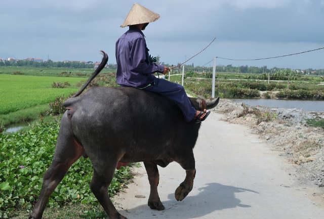 La industria farmaceútica veterinaria de México podría encontrar un cliente potencial en Vietnam