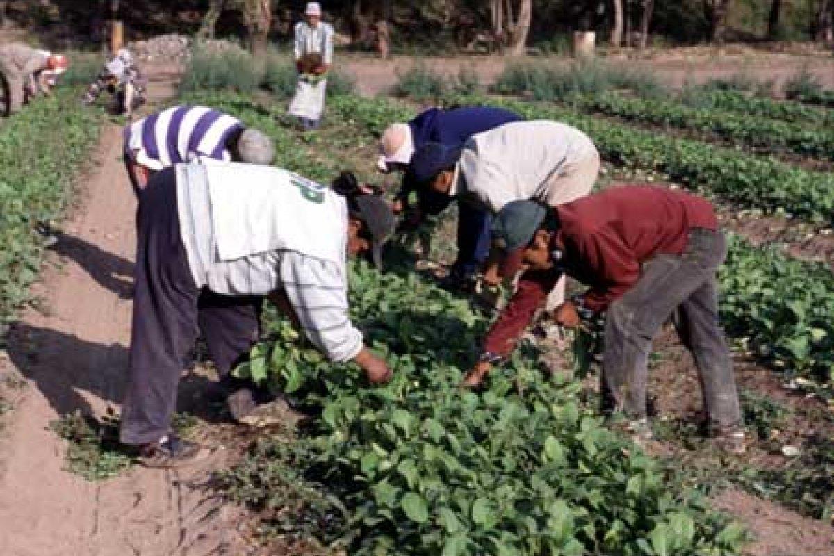 El trabajo informal en el sector agrícola creció 2.7% en el primer trimestre del año.