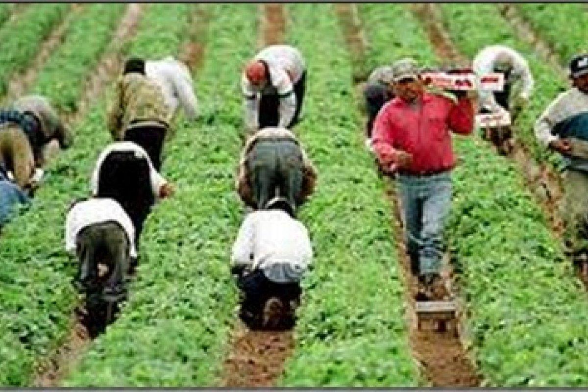 Sólo el 4% de los trabajadores guatemaltecos que laboran en México cuentan con seguridad social.