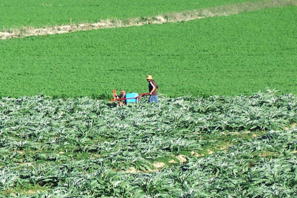 Las importaciones de alimentos pasarán de representar el 33.7% del consumo mexicano en 2014 al 34.1% en 2023, según la FAO y la OCDE.